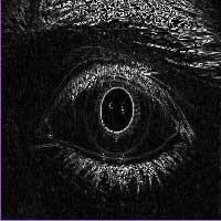 پروژه فیلتر تصویر در حوزه فرکانس برای عنبیه چشم با MATLA