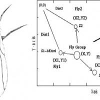 شبیه سازی الگوریتم بهینه سازی مگس میوه fly fruit در متلب